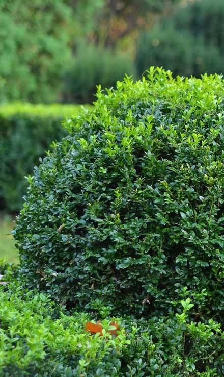 City Limits Landscaping & Snow Removal Shrubs & Hedges